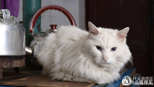 11 老丈人家,白猫在炉子边取暖.@14年5月图片