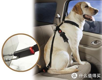 ▲防止狗狗从后座爬到前座来。图源:Pet Auto Safety