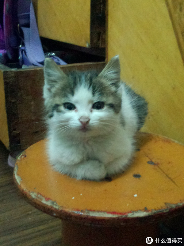 我家猫捡到的时候就很小,一点点拉扯大的