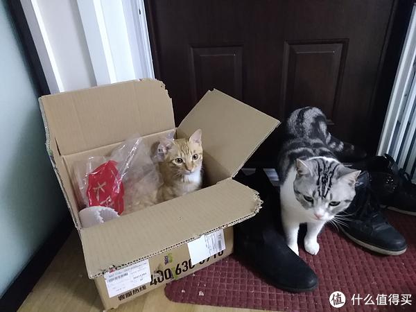 猫以食为天——科学选购猫粮指南