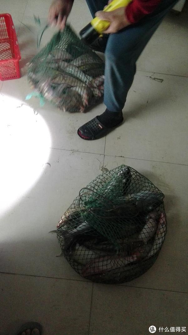 夜晚叉鱼2个小时,三十几斤。