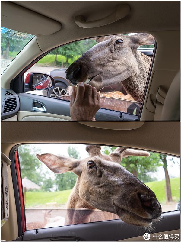 暑假好去处:与动物们的亲密接触——北京大兴野生动物园一日游