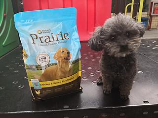 一个狗粮及狗翔搬运工的自白--Prairie百利全犬粮众测报告