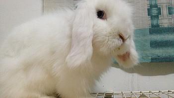 兔奴的血泪:Marukan 马卡 宠物外带包