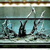 淡水鱼缸造景 篇二:曾经的日本朝圣之旅