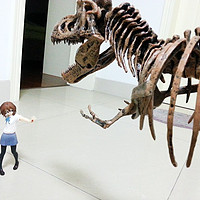 海淘 Elenco Science Tech T-Rex Skeleton 36 恐龙骨架模型