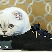 KedsTaylor Swift Sneaky Cat 小白猫猫鞋,去踏青喽!