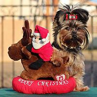 专题:圣诞礼物第二弹 — 送这些奇葩物,让Ta小惊喜一下