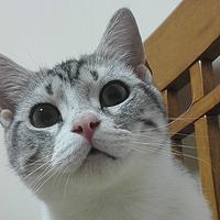 科学养好喵 篇二:#一周热征#宠物#五行缺水?猫猫补水大作战