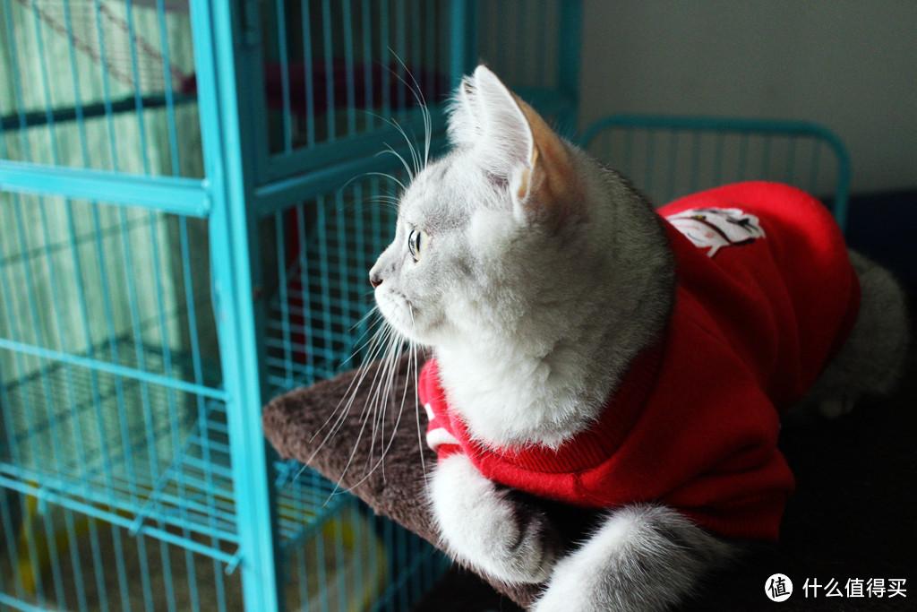 与猫鼻支抗争胜利全记录——天冷了,主子多保重啊!