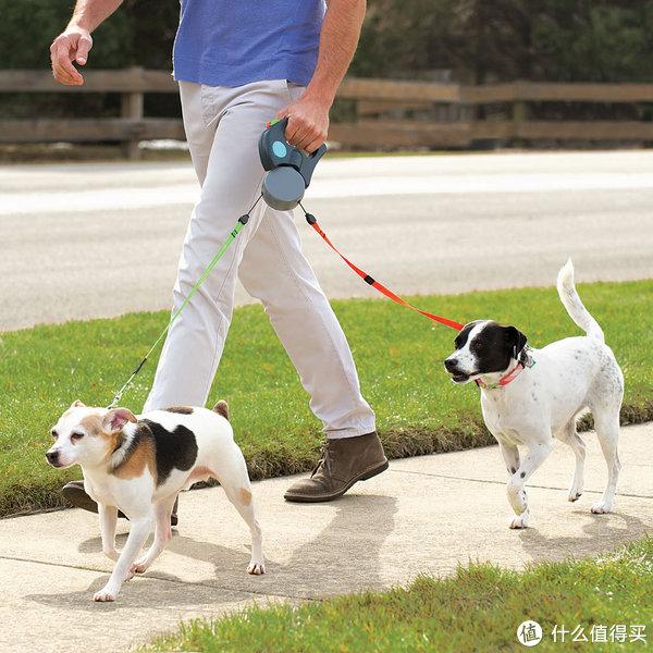 狗狗牵引绳选购指南 狗狗牵引绳哪种好 什么值得买