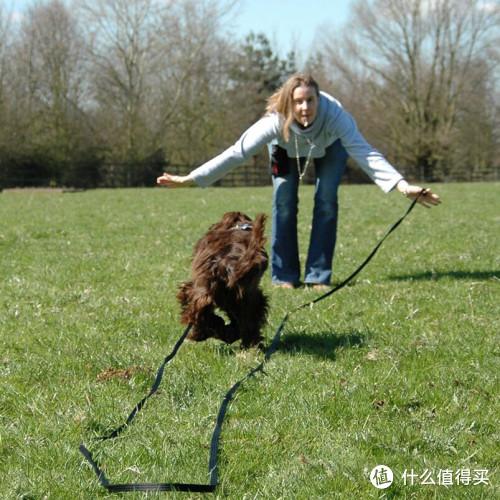 只选对不选贵!开扒各种狗狗牵引绳的好与坏~