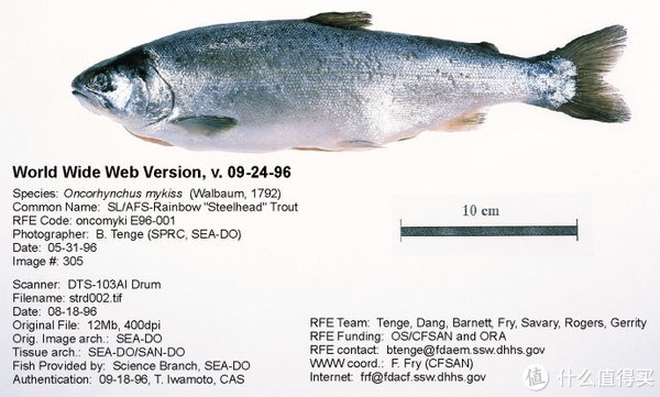 同是三文鱼口感差距却很大?一篇搞定三文鱼的买与吃