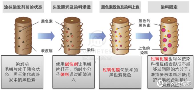 永久型染发剂工作原理