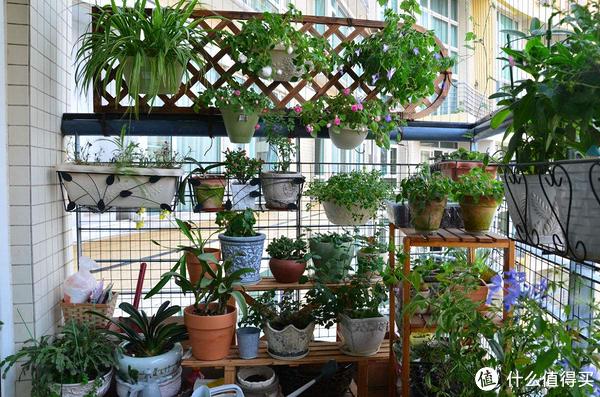 懒人养花攻略,分分钟把阳台变花园