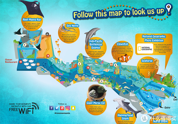 海洋馆分成了几个大区,比较大的有鲨鱼区,蝠鲼区,小丑鱼,海马,鳗鱼,水母,海龟等区域。