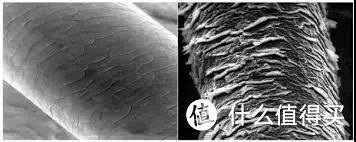 图片来源于网络  左正常头发,右受损头发。