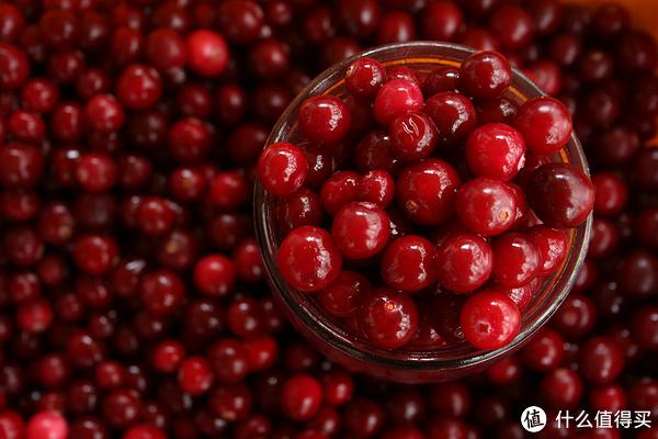 """又到蔓越莓收获季,北美放眼满是""""红宝石"""""""
