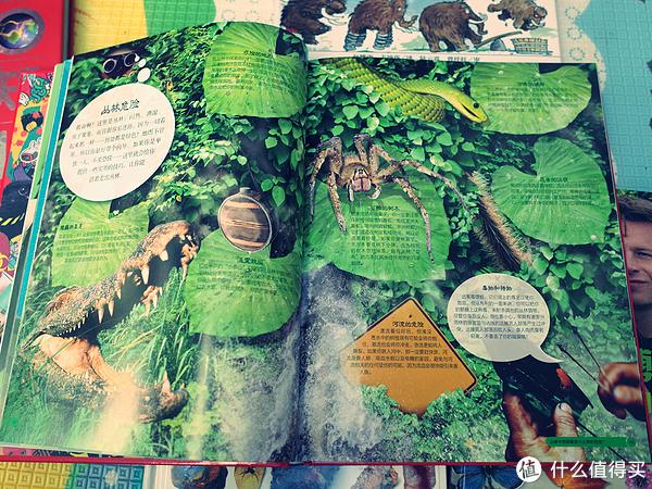 开卷有益的DK丛书 晒一晒那些DK科普类图书们