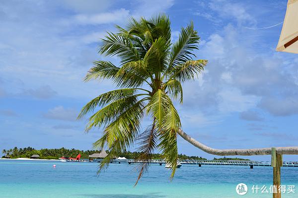 蓝天,大海,还有一棵树