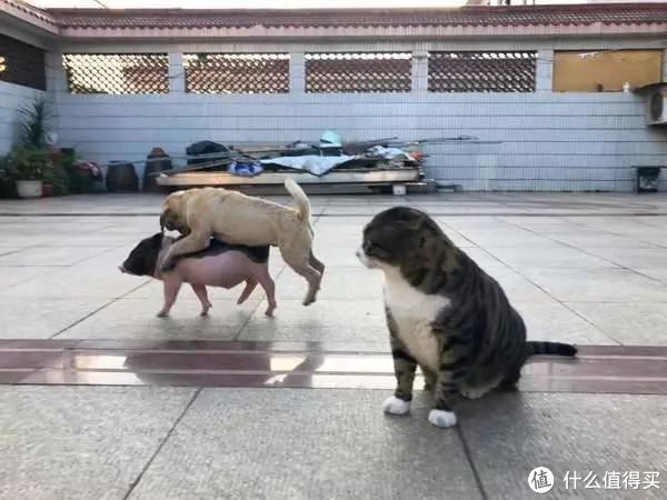 狗子也会来大姨妈?关于狗狗来大姨妈的那些事