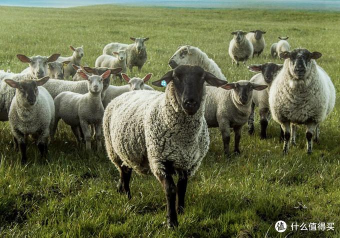 能改善睡眠质量,家有老人和宝宝必备 | 100%纯棉cria羊毛保暖被使用评测