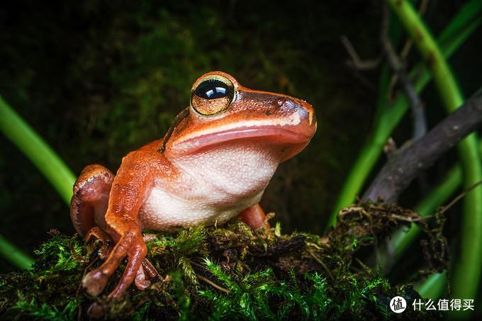 细长、防水20cm、自带LED补光,老蛙神鞭一统江湖—老蛙24mmF14特种微距镜头