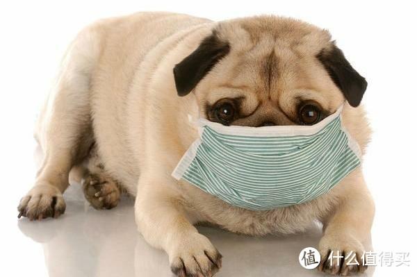 狗狗皮肤病治疗方法