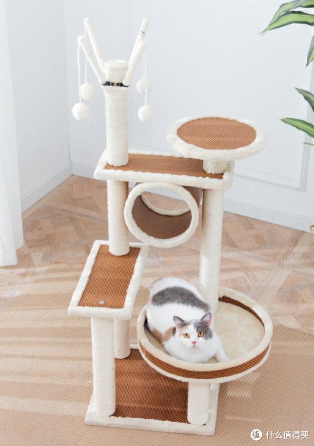 2020年养猫必备神器(一)三分钟带你了解猫爬架