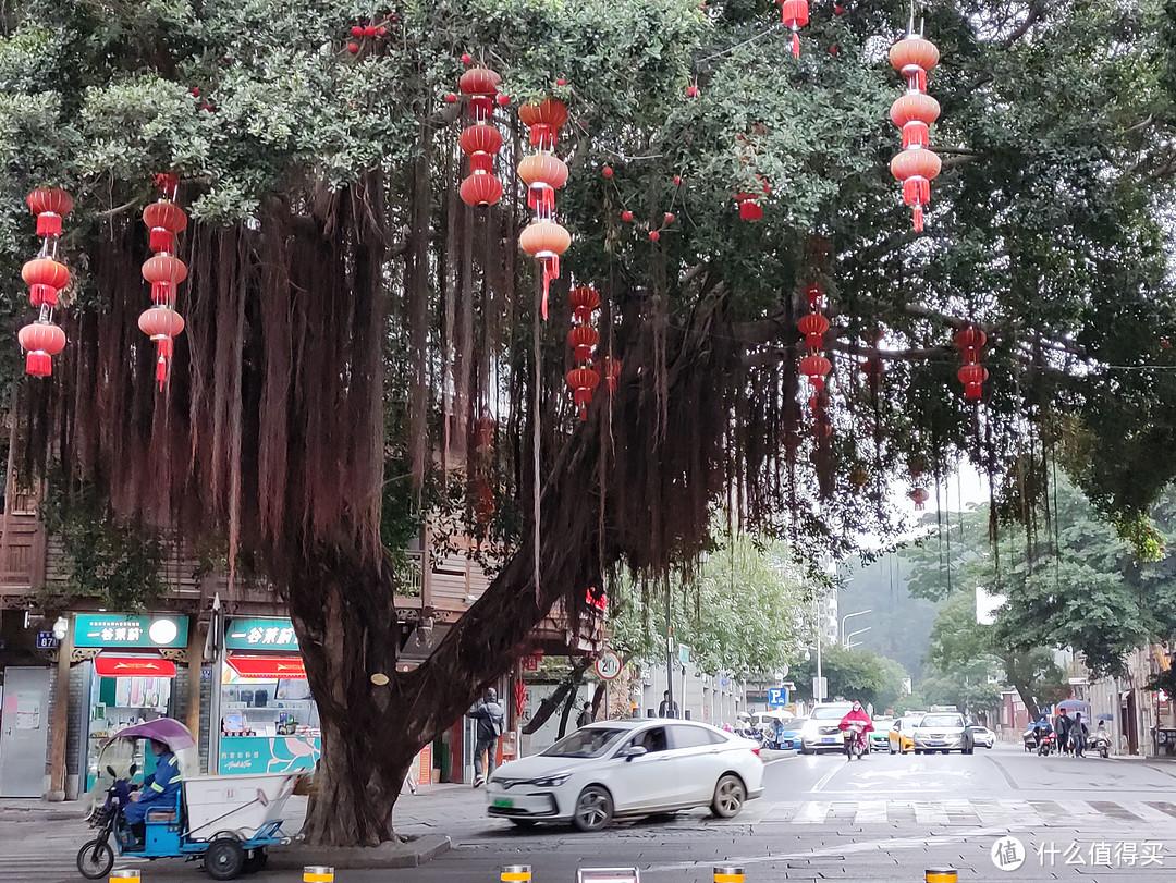 在街头巷尾都可以看见榕树,城市绿化十分到位