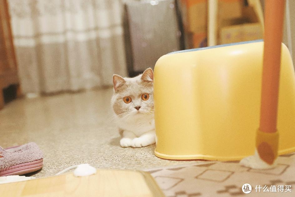 猫猫祟祟:又在搞什么好吃哒