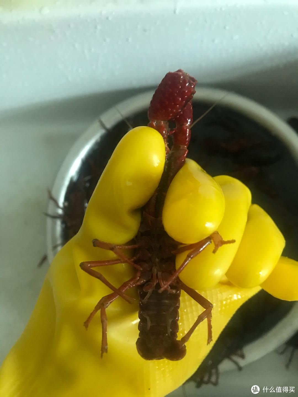 夏天,怎么能少的了美味的麻辣小龙虾!附小龙虾处理及清洗方法!