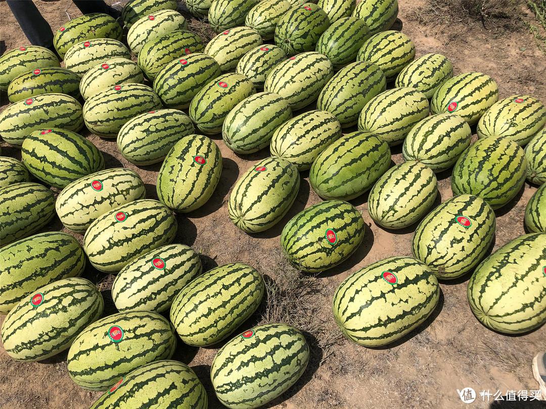 夏天买西瓜,认清国内这6大优质品种,个个甜美多汁,涨知识了