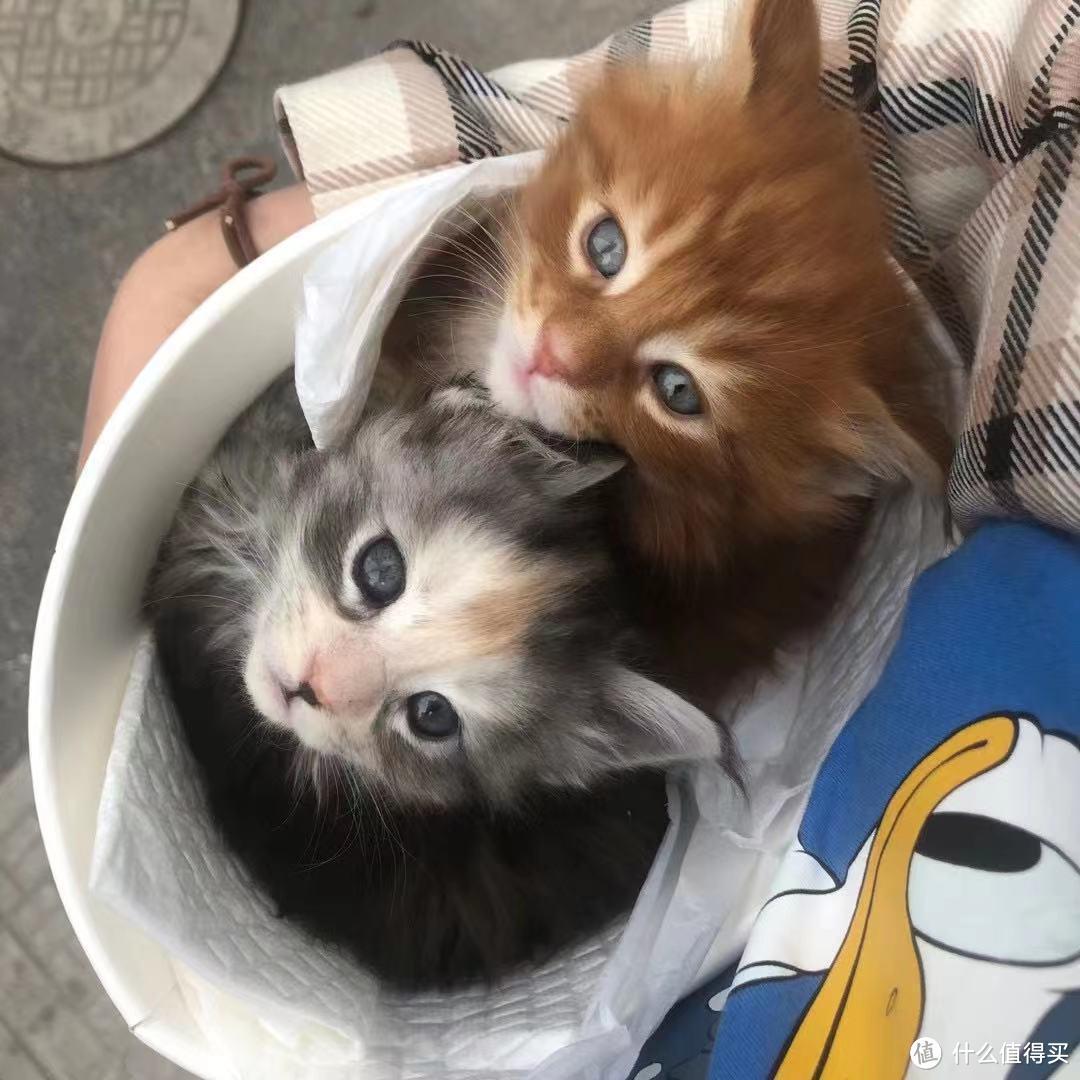 618宠物囤粮策略之幼猫粮, 这里还解答一下怎么选择幼猫粮?主流8款主粮点评