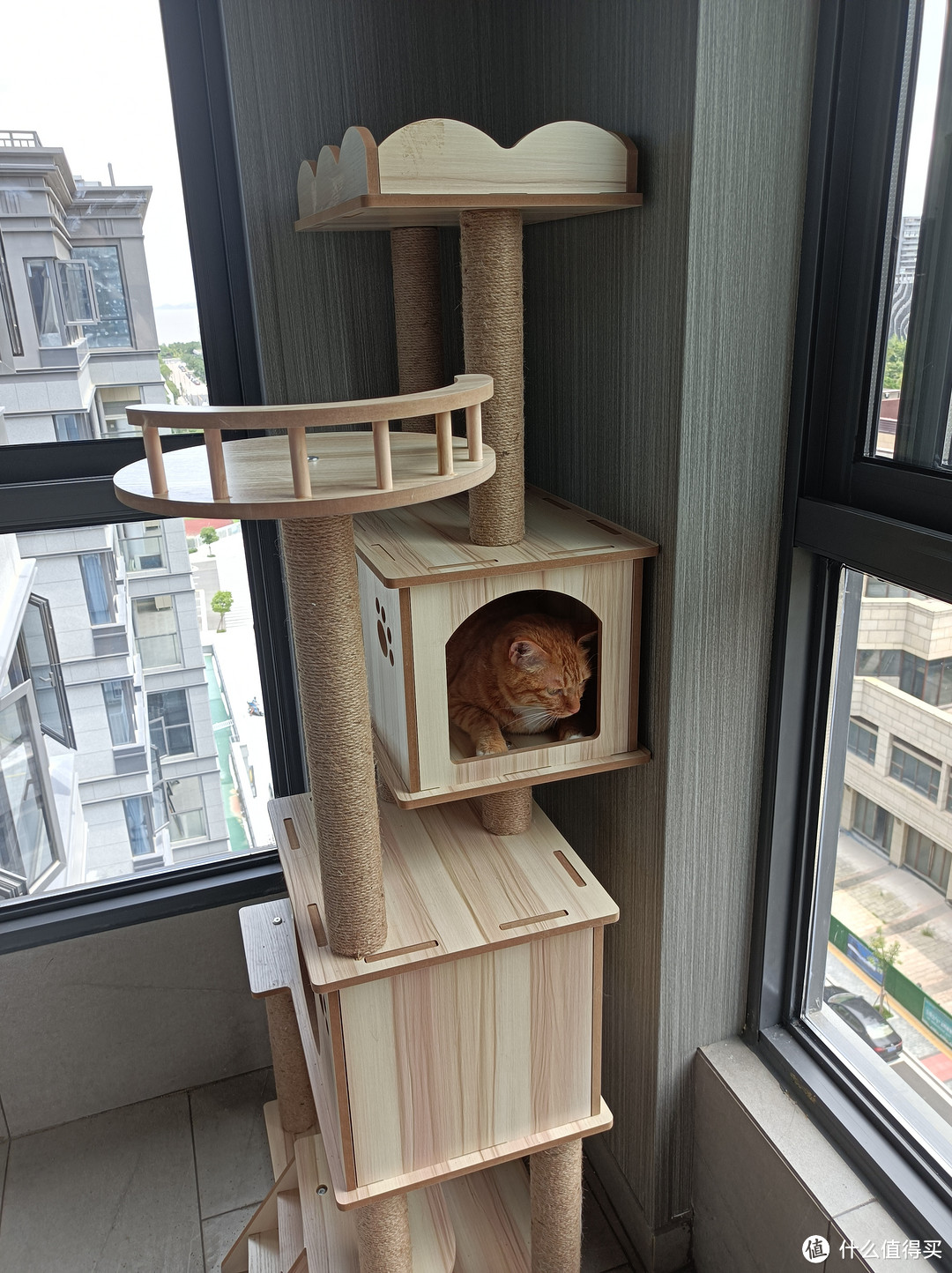 150元不到从拼多多买了个实木双层猫爬架……